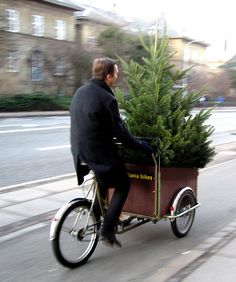 Christmas the Danish way: hauling the tree home on your bike. Photo courtesy of Nordic Spotlight.