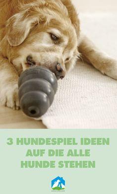 3 Hundespiel Ideen auf die alle Hunde stehen - jetzt bei uns im Haustier Notfallkarte Hunde Blog! #hunde #wissen