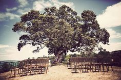 The Venue - The goldie room Waiheke (Love the big old pohutakawa for the ceremony - could do with some decorations though Woodland Theme Wedding, Wedding Themes, Wedding Photos, Wedding Ideas, Wedding Ceremony, Wedding Venues, Waiheke Island, Blog Images, Casual Wedding