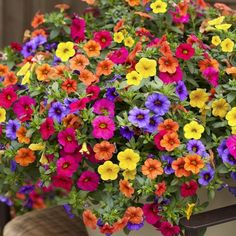 Take a look at the amazing 200pcs Hanging Petunia Mixed Seeds Color Waves Beautiful Flowers For Garden Plant Bonsai Flower seeds. Hot or not? Tag a friend who would love this! Need To Buy - Smarter Shopping, Better Living! Price: 1.99 & FREE Shipping Buy one here---> https://needtobuy.co/product/200pcs-hanging-petunia-mixed-seeds-color-waves-beautiful-flowers-for-garden-plant-bonsai-flower-seeds/