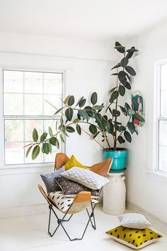 Rubber Plants, officially called Ficus Elastica, are my new obsession. These beautiful plants make stunning features in any space whether it be a small desk plant or a large thriving tree to fill a void. Ficus Elastica, Rubber Plant, Rubber Tree, Halls, Interior And Exterior, Interior Design, Butterfly Chair, My New Room, Decorating Blogs
