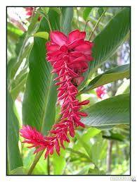 jolies fleurs exotiques