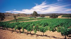 avoca winery landscapes - Google Search