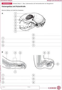 20 arbeitsblatt verdauung bathroom biology school bullet journal. Black Bedroom Furniture Sets. Home Design Ideas