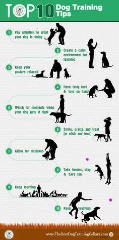 Here is top 10 dog training tips every #dog owner should know. Read this infographic carefully. Hope this will help you a lot. #dogs #animal #dogtraining #pets