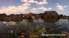 An exciting GoPro video of some highlights from our trip to the Galapagos #gopro #goprovideo #galapagos #ecuador