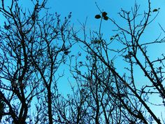 Winter tree silhouette without leaves 2