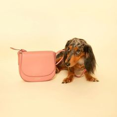 Little dog, little bag, big city   Tap link in bio for @raindrop_nyc's blush #crossbody by @mansurgavriel! #DogDaysOfSummer