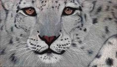 Snow Leopard, Oil on Canvas, 80cm by 140cm, (2015) by Marc Alexander