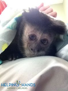 Hand Saw, Helping Hands, Monkey, Blankets, Animals, Jumpsuit, Animales, Animaux, Monkeys