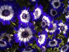 Google Image Result for http://www.freewarepark.com/image/free-gorgeous-flowers-screensaver.png