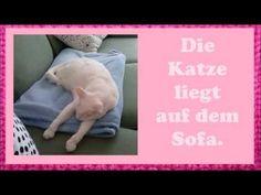 ▶ Deutsch lernen mit Katzen: Möbel und Präpositionen - YouTube