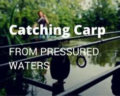 Heading off to France this year? Check this out: Catching carp from pressured waters. As a fishery owner, I meet a hundred or so anglers every year and have learnt a lot about how to approach your annual pilgrimage to France. Every water is different of course but I hope this piece gives you food for thought before your session. http://www.frenchcarpandcats.com/blog/blogstory.php?seq=115