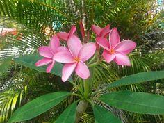 My beautiful Florida Garden