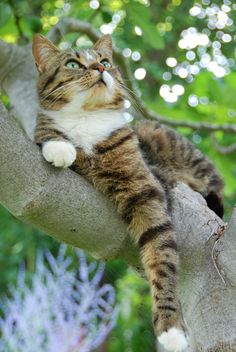 Kitty, stribed, tree, look out, cute, nuttet, pet, cat, cute, nuttet, adorable, green eyes, watching for birdies?, photograph, photo