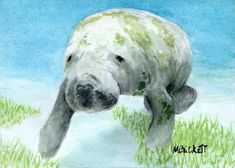 ACEO Original Painting Manatee wildlife animals sea cow endangered marine ocean #Impressionism