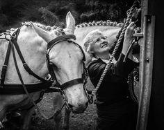 Irish draught horse by Liz Stowe on