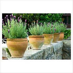 Lavender and terracotta - along low wall? Lavender Planters, Lavandula, Terracotta Pots, Spring Garden, Clay Pots, Potted Plants, Garden Pots, Container Gardening, Planter Pots