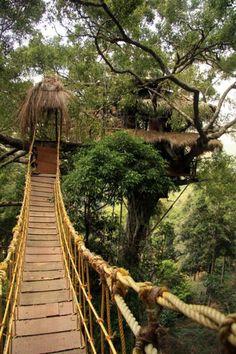 TREE HOTEL IN INDIA