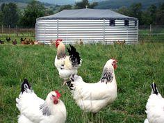 Technigîte GC Pondeuses - Plein Air Concept | élevage | Pinterest