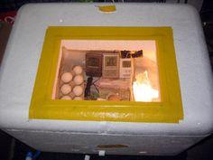 Styrofoam Forced Air Egg Incubator V 11 Steps Homemade Incubator, Diy Incubator, Chicken Incubator, Urban Chickens, Pet Chickens, Raising Chickens, Chickens Backyard, Best Chicken Coop, Building A Chicken Coop