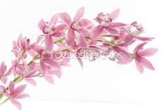 Orchid flower over white by margaryta - Foto Stock