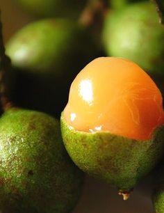 (Carica papaya) mamón, cuyo nombre científico es Carica papaya pertenece a la familia de las caricáceas, orden parietales. En Centro América se la conoce por el nombre de Higuera de las islas y en el…MásMás  Colombia Food  In unserem Blog viel mehr Informationen  https://storelatina.com/colombia/recipes #detox #colombie #Колумбия #колумбия