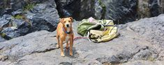 Hiking with a dog in Austrian hiking villages | Hiking Collection by komoot Hiking Guide, Hiking Tours, Hiking Trails, Forest Path, Forest Road, Carinthia, Alpine Meadow, Sea Level, Summer Travel