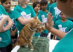 Teach your cat to give high fives in six easy steps, from certified behaviorist, Arden Moore for Pets Best Pet Health Insurance. Training A Kitten, Cat Behavior Problems, Information About Cats, Cat Hacks, Kitten Care, All About Cats, High Five, Cool Pets, How To Train Your