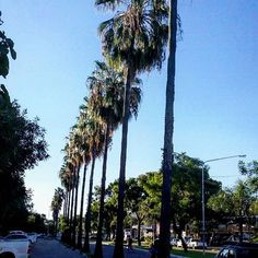 #corrientescapital #corrientescity #nature #running #landscapephotography #urbanlascape #travel #paisaje #turistic #photooftheday #photographyislife #skyline #parquemitre #palms #streetphotography #streetview
