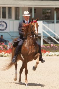 The American Saddlebreds will bring their unmatched excitement to the Dixon Oval - photo by Brenda Carpenter