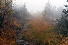 #Veranstaltungen im #Nationalpark #Schwarzwald KW42 Foto: Herbst am #Altsteigerkopf (Rebbe)   http://www.schwarzwald-nationalpark.de/fileadmin/_schwarzwald/Pressemitteilungen/PM_2016_10_12_Veranstaltungen_KW42.pdf