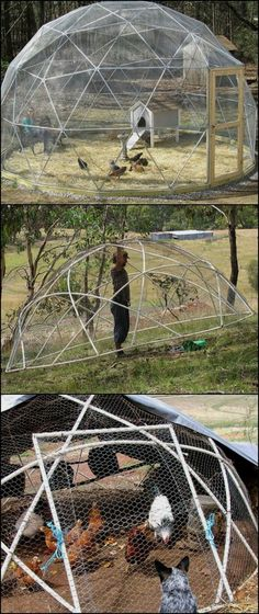 Need a chicken tractor? A geodesic chook dome might just have the features you're looking for! By choosing a geodesic structure to house your chooks, you end up with circular beds. It is also easier to move around the yard... Learn more about what makes a geodesic chicken tractor great by heading over to our site at http://diyprojects.ideas2live4.com/2016/02/18/how-to-build-a-geodesic-chicken-coop/ #birdhouseideas