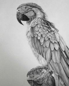 Zeichnungen: Monica Lee
