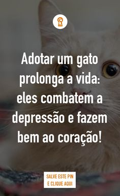 Adotar um gato prolonga a vida: eles combatem a depressão e fazem bem ao coração! Você já tem um gato em sua vida? Se não, precisa saber o que está perdendo!