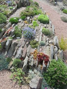 Crevice garden at the Alpine Garden Society garden in Pershore, Worcester, UK.