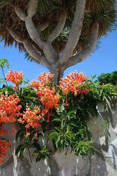 Puerto Rico garden