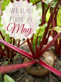 What to Plant in May | Tipsaholic.com