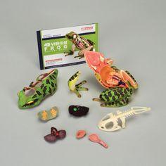 4D Vision™ Frog Anatomy Model   Carolina.com