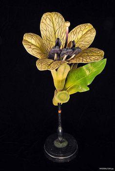 Botanical model: Henbane | Flickr - Photo Sharing!