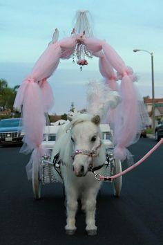 Miniature horse carriage rides, dreams do come true! AllGodsCreatures.net