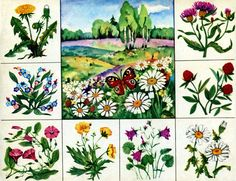 Sequencing Activities, Infant Activities, Teaching Plants, Fruit Flowers, Forest Theme, Summer Art, Science And Nature, Flower Crafts, Projects For Kids