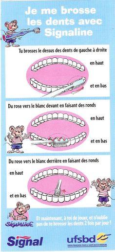 LE MONDE DES ANIMAUX Petite Boite /à Dents de Lait Verte