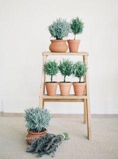 Jen Huang Studio | Topiaries | Indoor Herb Garden | Santa Barbara  California Photo Studio | JenHuangPhoto.com