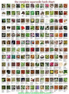 Ayurvedic herb chart