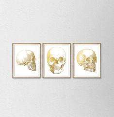 Faux Gold Foil Anatomy of the Human Skull Set by SamsSimpleDecor