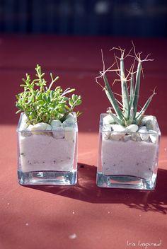 DIY: Succulent Terrarium