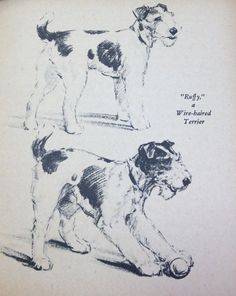Wire Haired Terrier Dog Print 1940 Diana Thorne Vintage Book Plate ...