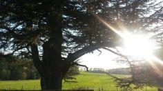 Ce mercredi 12 avril, le soleil décline sur les paysages pastoraux et bucoliques de la Route de la Butte aux Chênes.