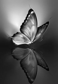 i Phone dark wallpapers Pencil Drawings Of Flowers, Cool Art Drawings, Pencil Art Drawings, Art Drawings Sketches, Butterfly Sketch, Butterfly Painting, Butterfly Art, Butterfly Wallpaper Iphone, Black And White Flowers